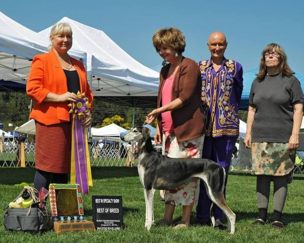 BISS BOB 2016 AM Specialty Show