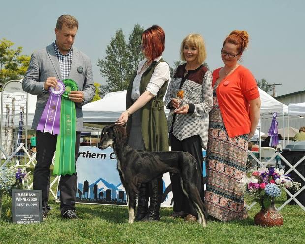 Best of Winners Best Puppy AM